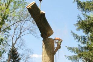 large tree removal, Buffalo, NY